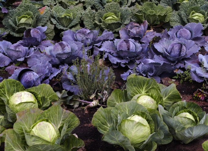 Le verdure di stagione.