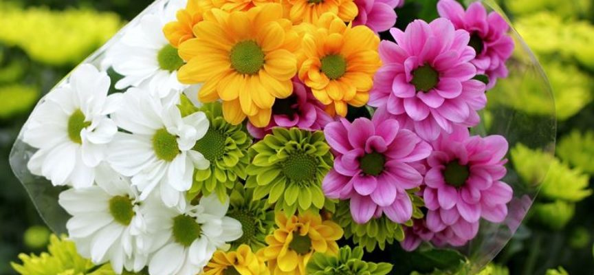 acquistiamo i crisantemi della Versilia e della Lucchesia,
