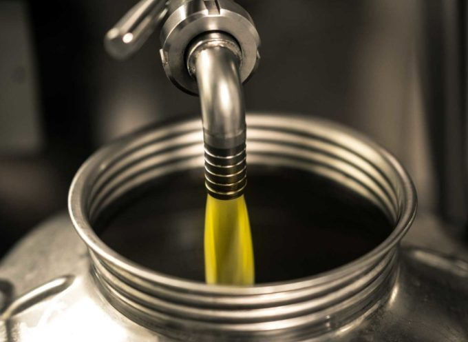 """Olio, Baragli (Fedagripesca Toscana): """"Produzione in calo del 50%, ma qualità ottima"""""""
