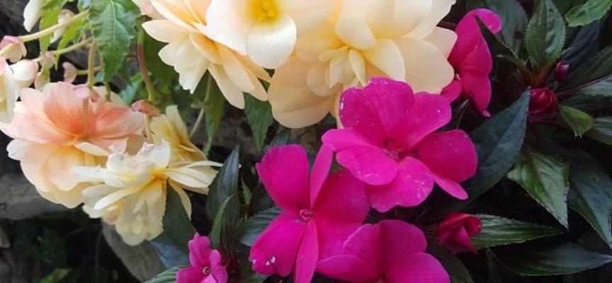 I fiori di lunga durata…