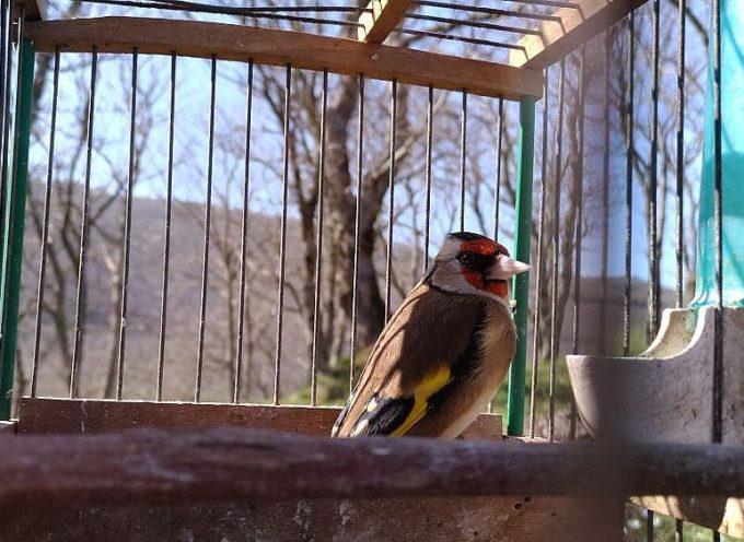 Denunciato per detenzione fauna selvatica e uccellagione