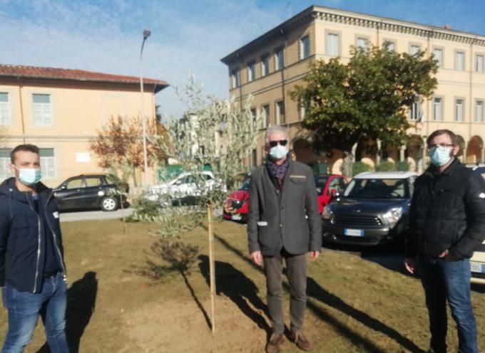 Foresta Che Avanza regala ulivi al comune per la Festa dell'Albero