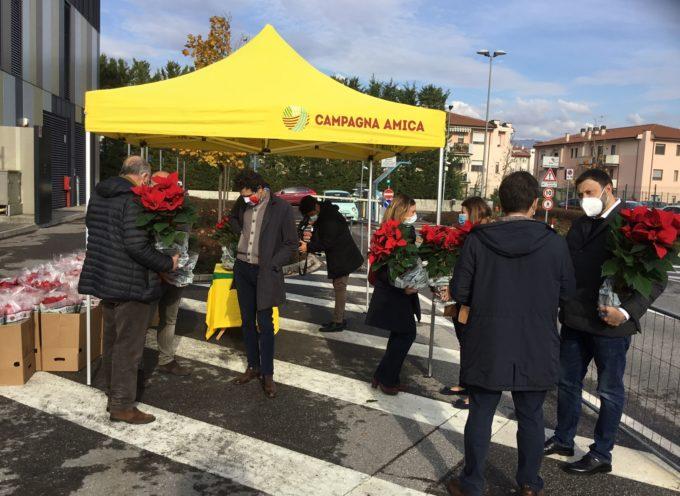 "stelle di Natale donate da Coldiretti Toscana e florovivaisti all'ospedale ""San Luca"""