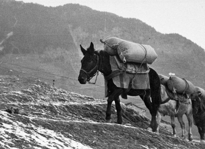 le mulattiere, il mulo e il loro Re. Storia di un antico mestiere garfagnino