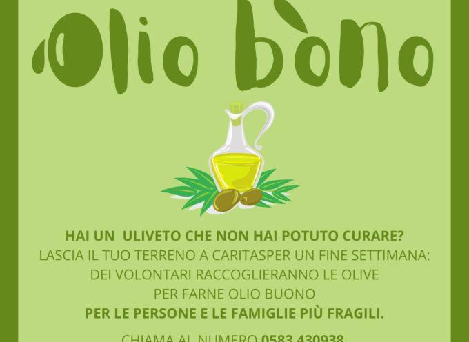 Una raccolta di olive negli oliveti non curati.