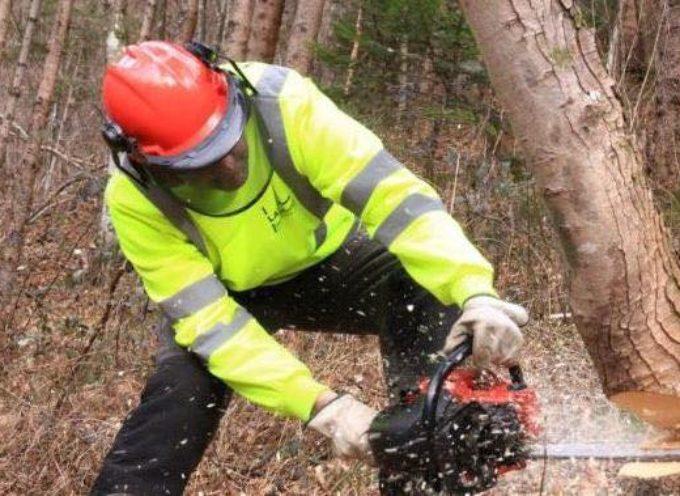 piu' agrevole tagliare i boschi  – meno burocrazia