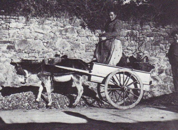 Il carretto pieno di ceste per portare a vendere ortaggi al mercato…