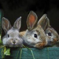 I piccoli animali di campagna…