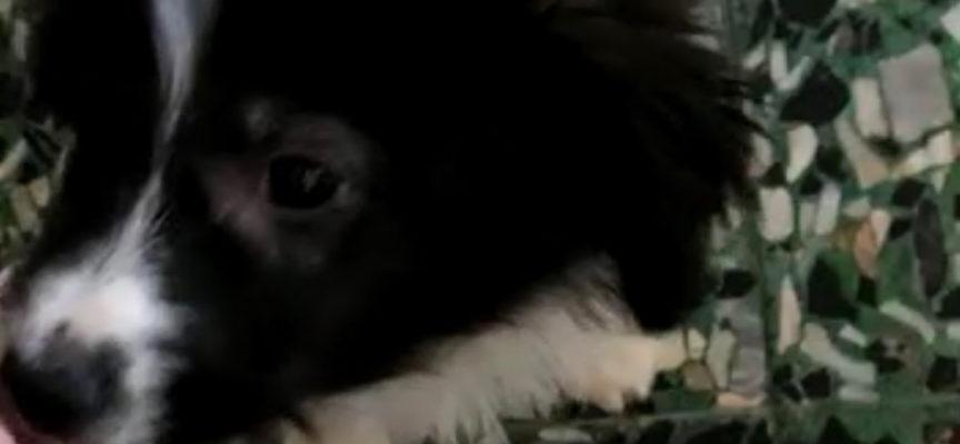 Colonia Cristiana adotta una cagnolina dalla Calabria!
