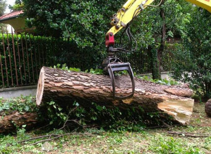 Saranno abbattuti sei alberi a San Concordio