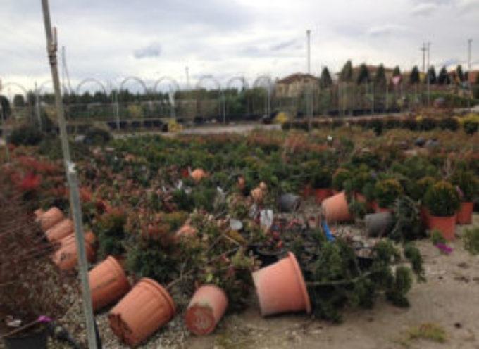 Maltempo: fiori ed ortaggi sott'acqua in Versilia, si contano i danni