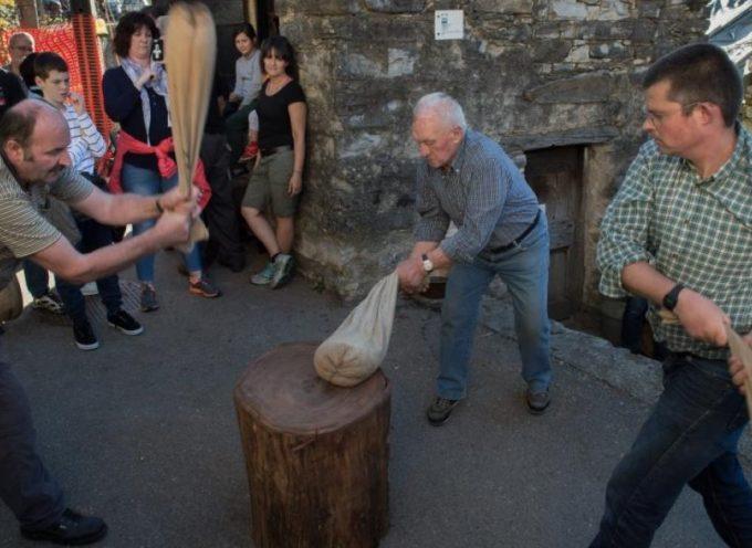 La battitura delle castagne come ai tempi antichi