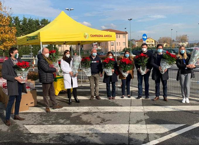 Coldiretti, con ultimo DPCM salve 4 milioni di Stelle di Natale della Versilia