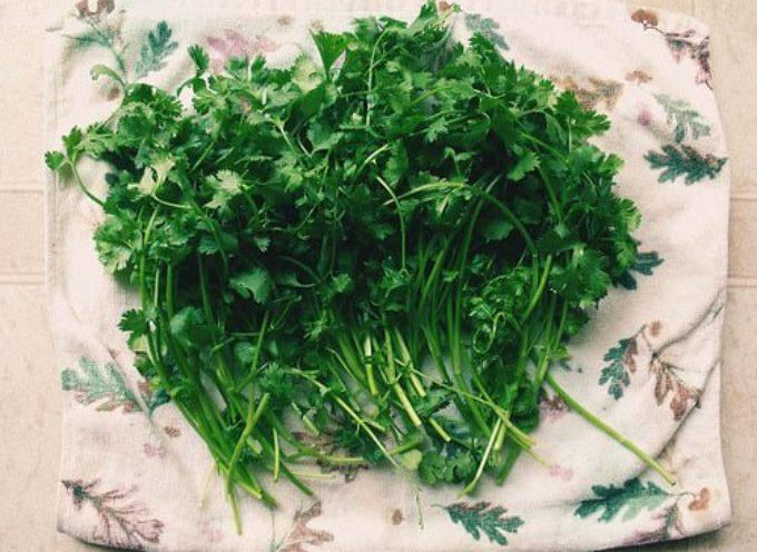Le buone erbe: il Prezzemolo.