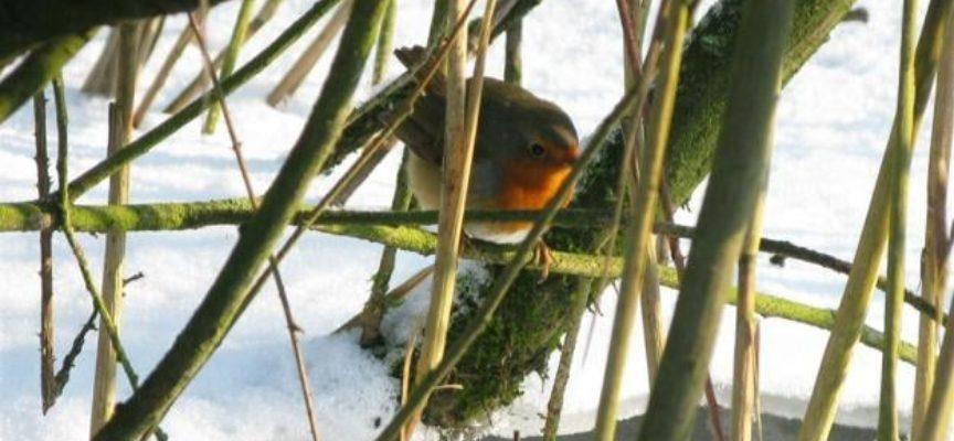 In molte zone ha nevicato, molti uccellini stanno soffrendo per il gelo,