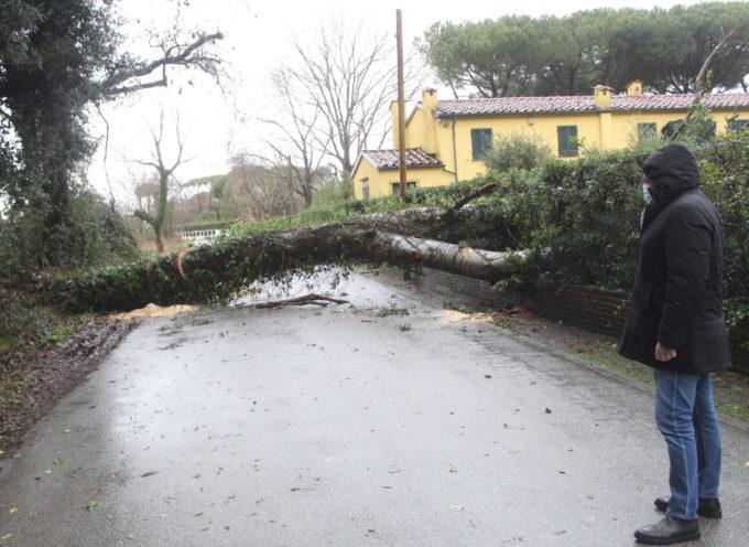 Maltempo: vento fino a 68 km/h Pietrasanta, due alberi caduti e piccoli smottamenti in collina