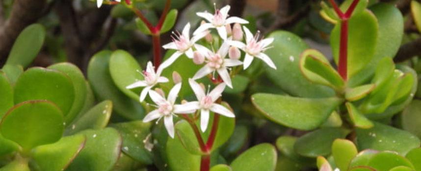 I fiori dell'Inverno.