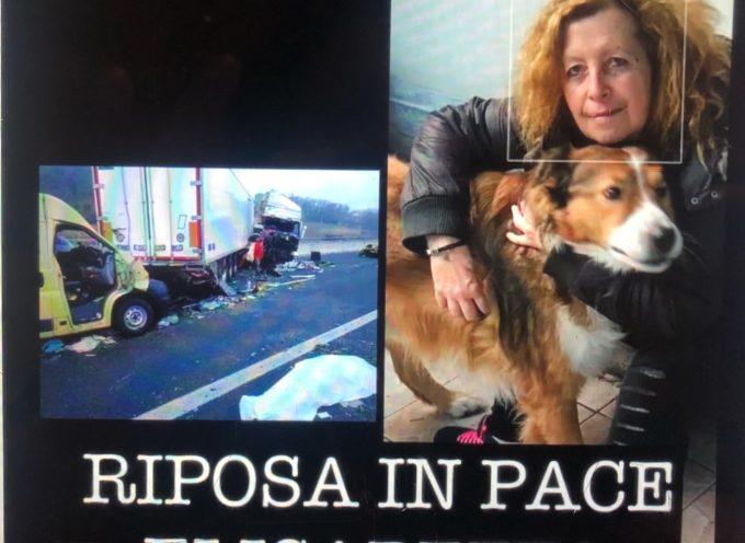 Schianto sulla A14, tra Pesaro e Cattolica, muoiono 3 volontari e un cucciolo. Portati in salvo gli altri animali destinati all'adozione.