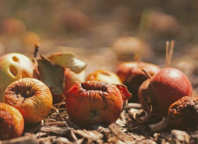 Lo spreco alimentare: quanto ci dobbiamo allarmare?