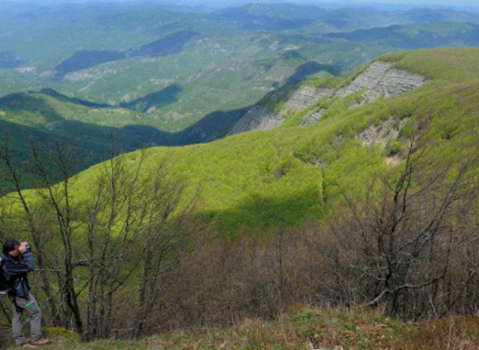 Foreste, dalla Regione 6,5 milioni alle Unioni dei Comuni montani