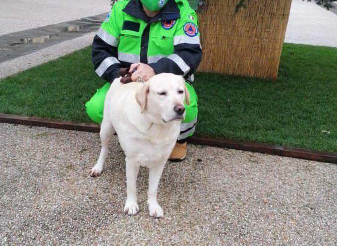 Emergenza Covid: 500 uscite e 40 cani seguiti in 6 mesi. Questi i numeri  di Zamp-eggiando