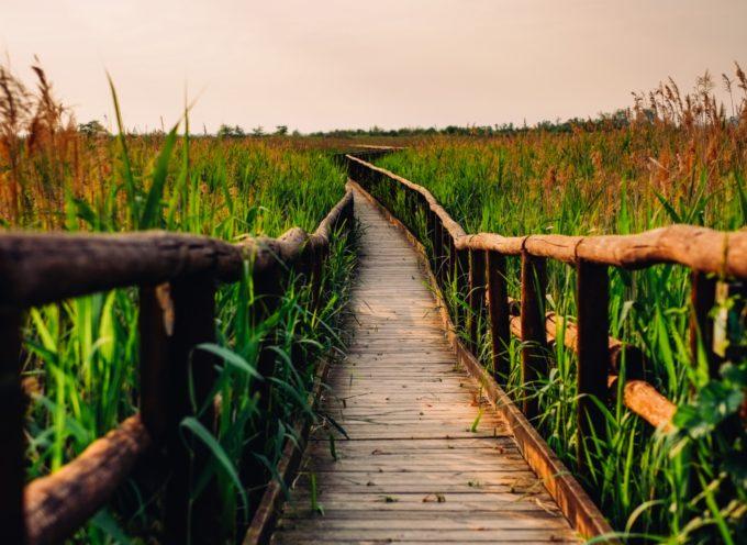 I progetti per migliorare il lago di Massaciuccoli