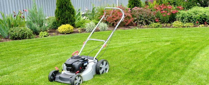 """Bellandi """" Non soddisfatti del taglio dell'erba dei primi tre quadranti, Alia correrà ai ripari """""""