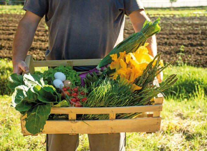 Vendita diretta. Cia: sempre più famiglie comprano dagli agricoltori (+10%)