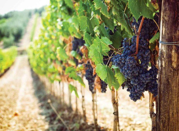 Pronto il sistema unificato di certificazione della sostenibilità della filiera vitivinicola