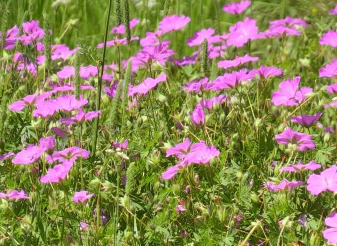 Il Parco delle Apuane precisa le norme sulle piante officinali