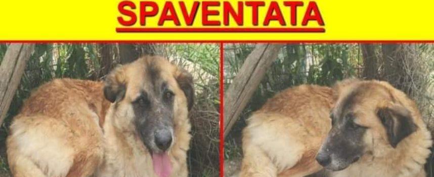 Smarrita Romea a Capezzano Pianore, aiutiamo i padroni a ritrovarla!
