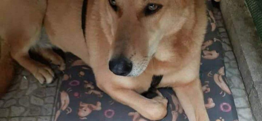 Viareggio: smarrita cagnolina di nome Camilla sul V.le dei Tigli, aiutiamo i proprietari a ritrovarla!
