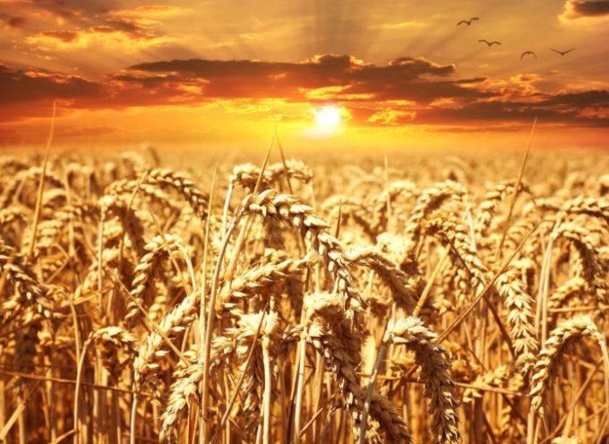 Innovazione e ricerca per agroalimentare sostenibile. Scade il 16 agosto il bando per la presentazione progetti