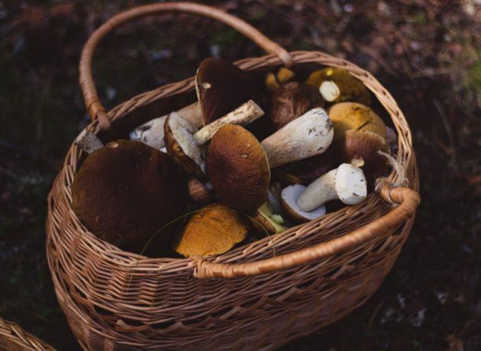 Andare per funghi in garfagnana