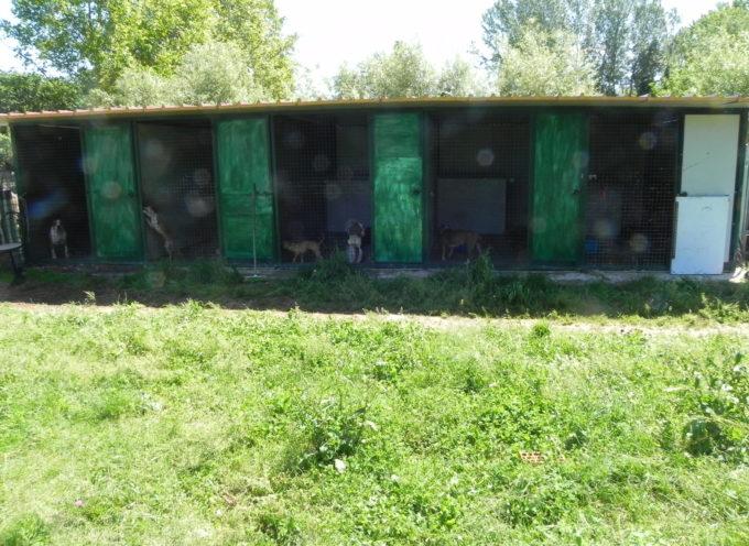 15 Cani, 11 ovini e molti altri animali da cortile sequestrati.
