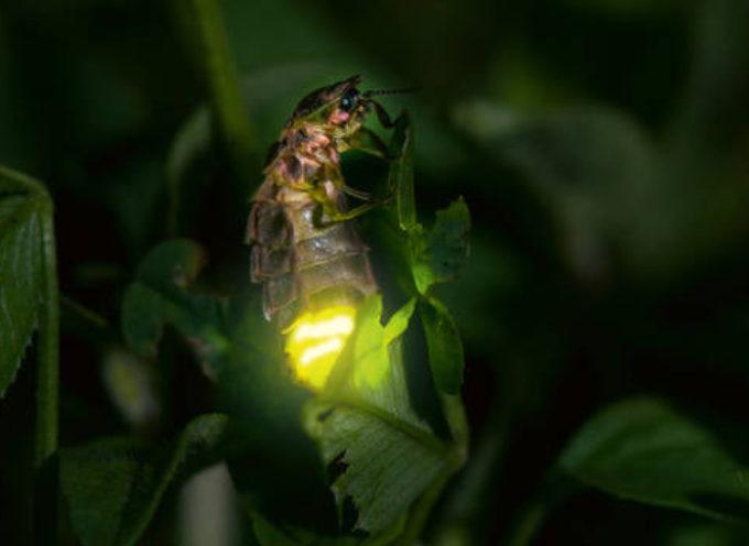 I lampi di lucciole in una calda notte d'estate