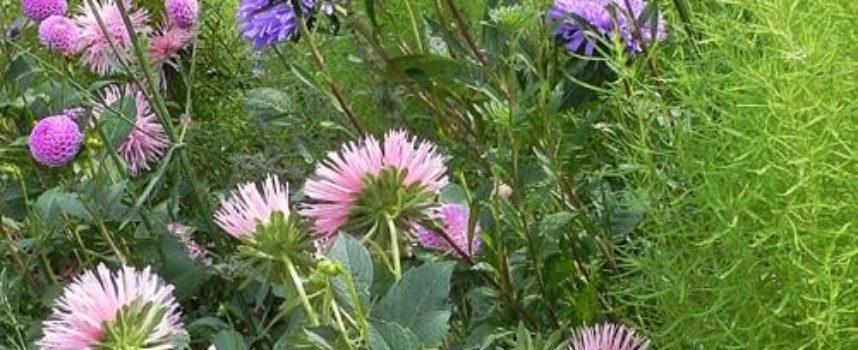 abbiamo smesso di seminare, e molti fiori annuali sono venuti meno
