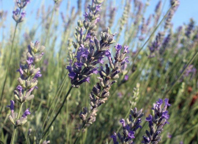 La via delle erbe e dei fiori a Massarosa: