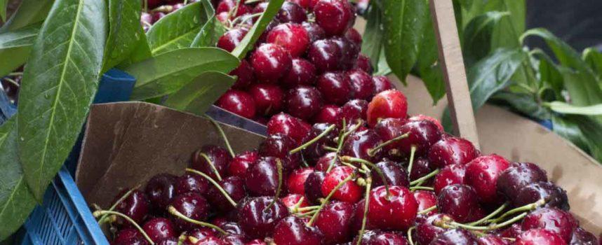 L'invasione delle ciliegie turche sul mercato italiano