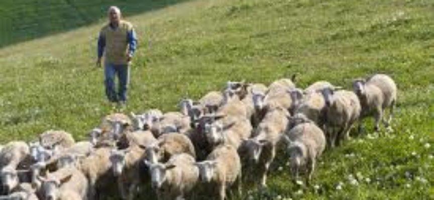 """Nasce la """"task-force lupo"""", uno nuovo strumento operativo per allevatori"""