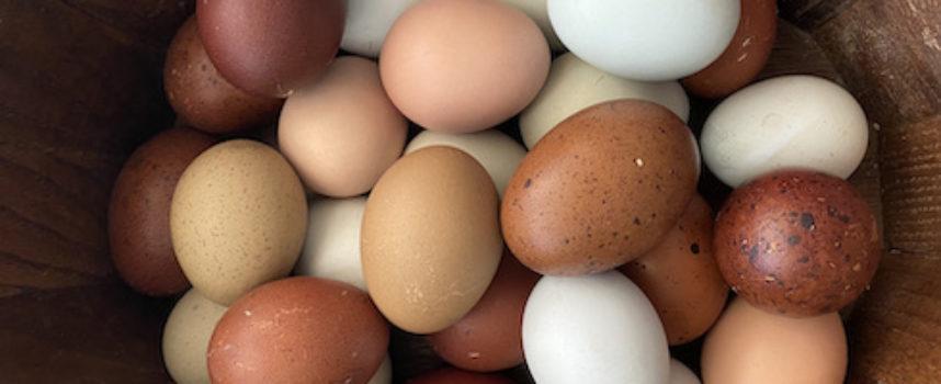 Uova, quando le galline ne fanno di tutti i colori