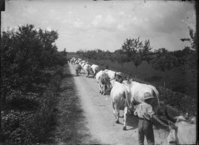 In Settembre, con la fine dell'estate, ricominciavano le Fiere e i mercati bovini.