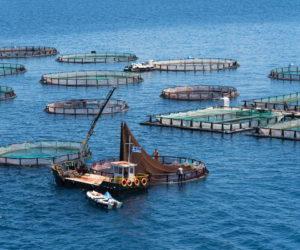 """I farmaci usati negli allevamenti di pesce """"sono come i pesticidi"""""""
