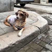 In-Habit: va avanti il progetto per una politica integrata uomo-animale