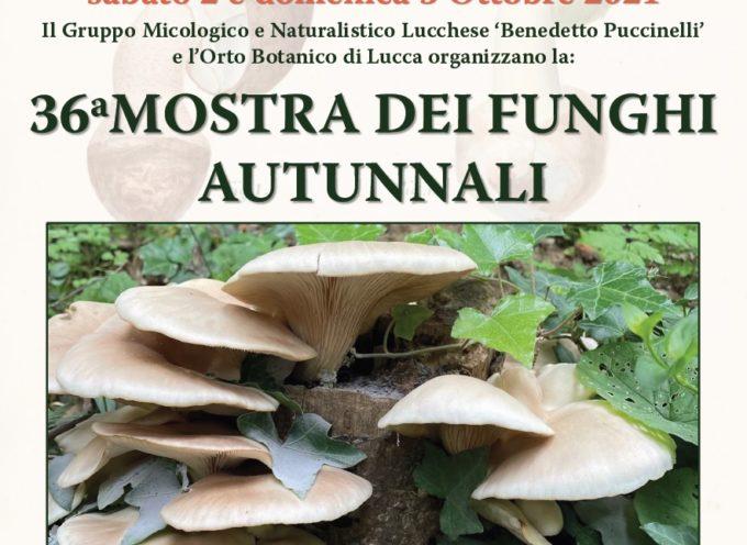 All'Orto Botanico di Lucca la 36esima edizione della Mostra di funghi autunnali nel nome di Benedetto Puccinelli