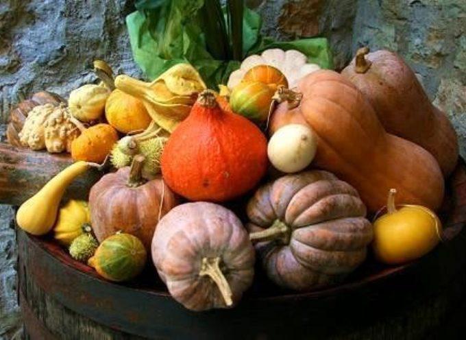 Autunno, tempo di zucche: commestibili, ornamentali, sono i frutti di questa stagione.
