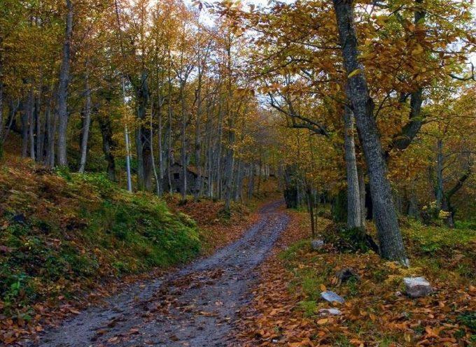 Durante l'autunno i boschi si colorano di arancione e rosso