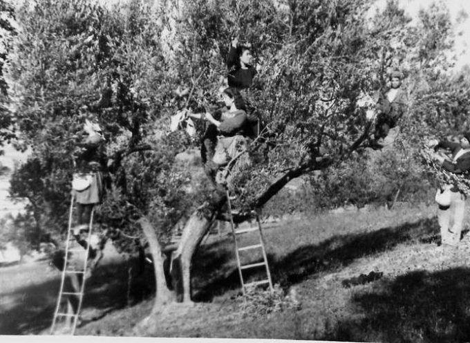 Autunno, è tempo della raccolta delle olive.