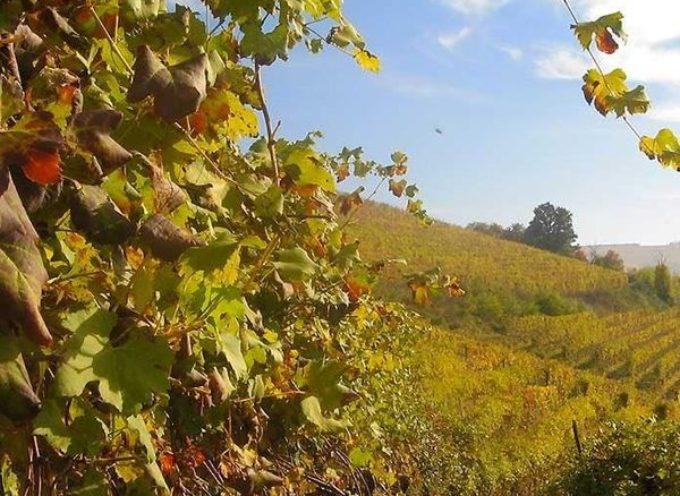 Il fascino delle viti in autunno….