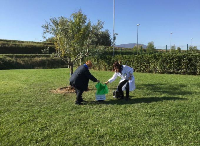 """AVO Lucca: all'ospedale """"San Luca"""" piantato un olivo come segno di speranza"""